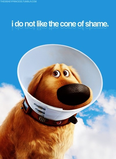 Dug. This is my favorite line from the whole movie, my dog just got nuetered and we call his cone the cone of shame