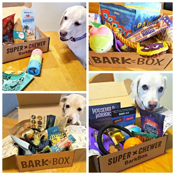 Barkbox Or Super Chewer Barkbox 5 For National Dog Day Baby