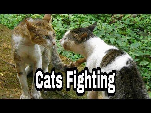 Animal lover youtube