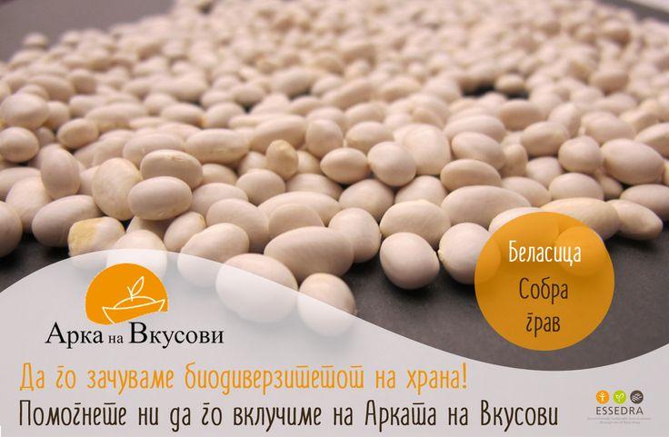 Sobra Beans: http://www.slowfoodfoundation.com/ark/details/1757/sobra-bean#.VOEEpvnF-So