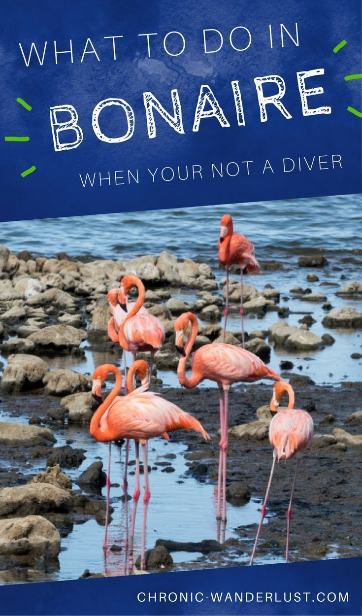 What to do in Bonaire when you are not a scuba diver? There's still plenty of things you can do on the island besides scuba diving!