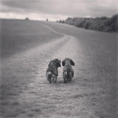 Me and Mummy #Teddy #Teddington #rauhaardackel #wirehair #wienerdog #wiener…