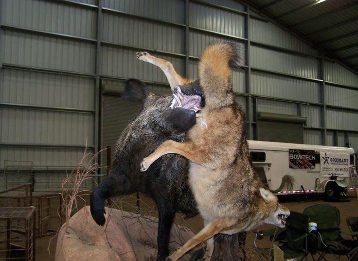 Russian Boar full body Mount | Taxidermy | Pinterest ...
