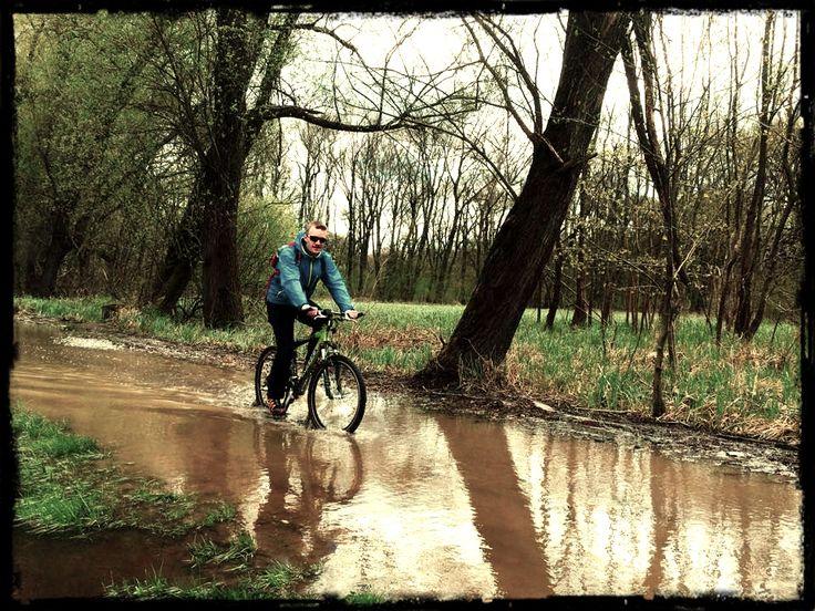 Lužní lesy byly vždy podmáčené řekou Moravou. A naštěstí doposud jsou, a to je dobře :) Moc mě to potěšilo. (Autor: Honza)