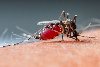 Chikungunya - Comprehensive overview covers Causes, Symptoms and its Homeopathic Treatment.