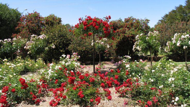 Barooga Botanical Gardens