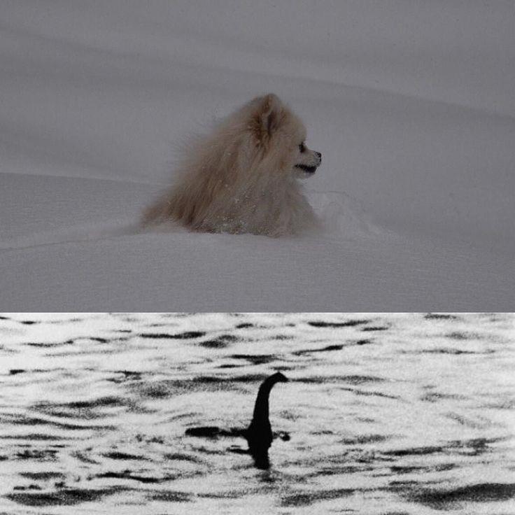 I'm little Loch Ness monster  Я маленькое Лох-несское чудовище by teddy_white_bear