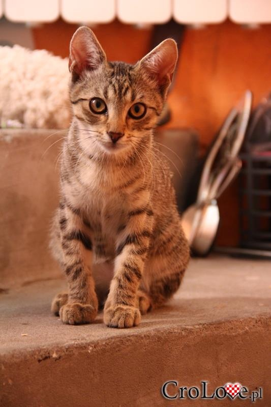 Cat in Croatia #croatia #chorwacja #cat #cats