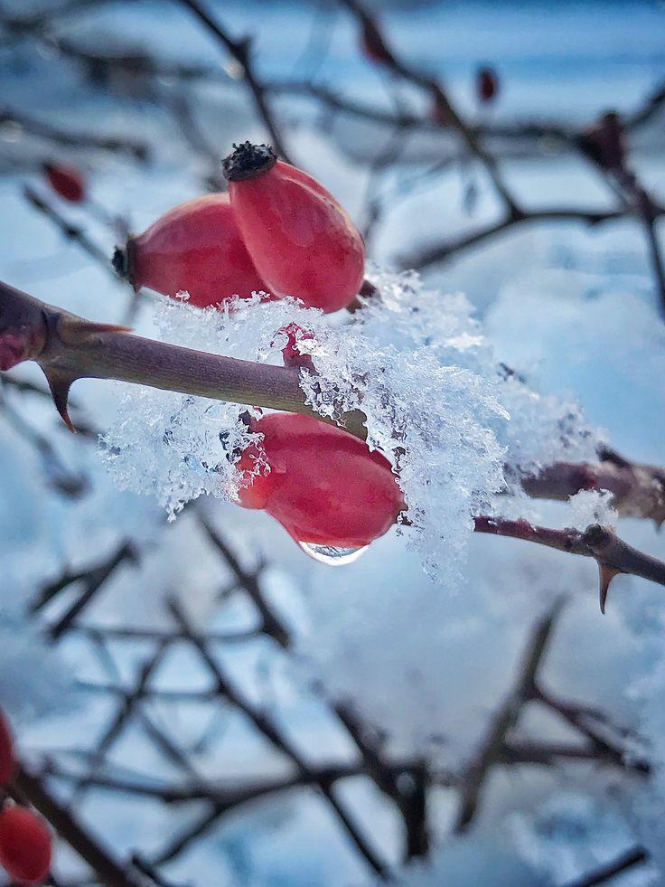 Zimní Provoněný den ❄️