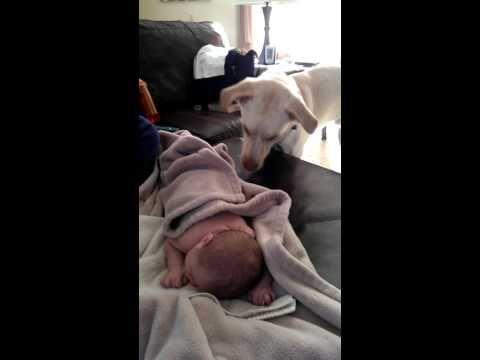 Dog Gently Covers Sleeping Baby With Blanket