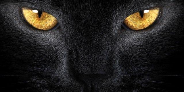 gatto-nero-primo-piano