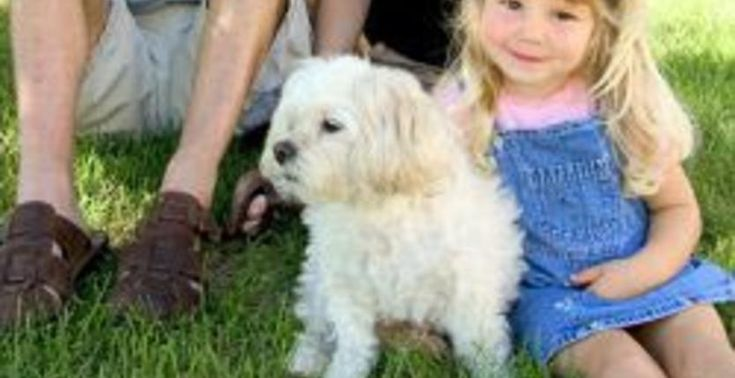 Cleaning Service for Pet Owners and Cost Omaha Lincoln NE
