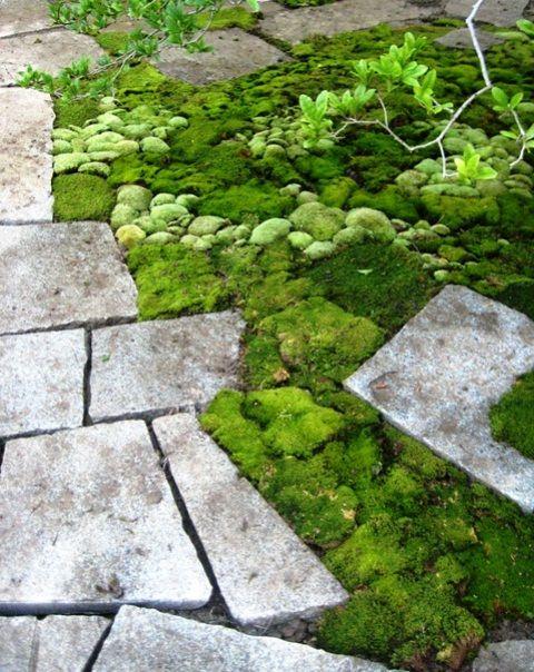 Multiple moss varieties. Cool idea for a non-symmetrical garden.