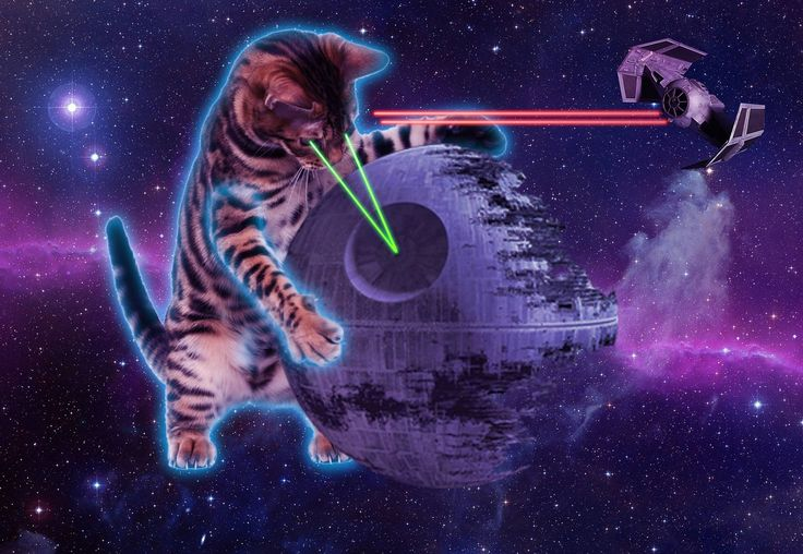 Space Cat Wallpapers Free