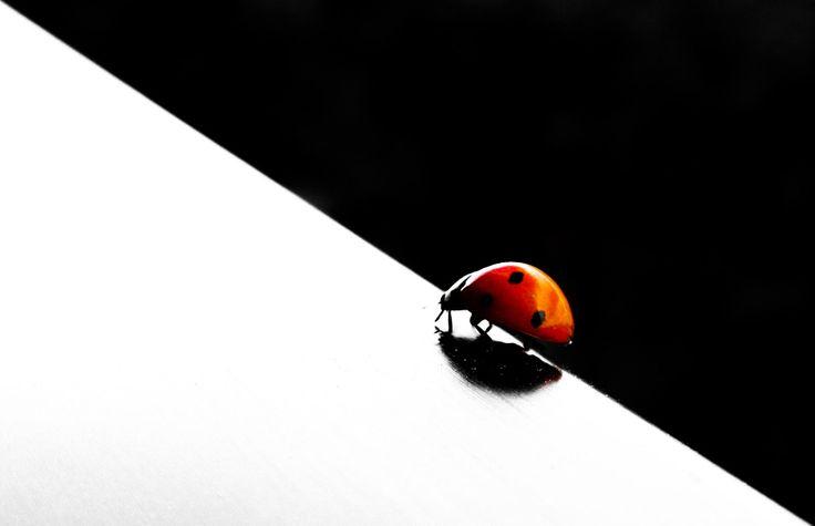 Ladybug by Luca Moriconi - Photo 165282059 - 500px