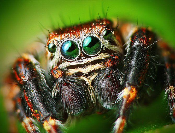 Maldito Insolente - Araña blanca, araña negra