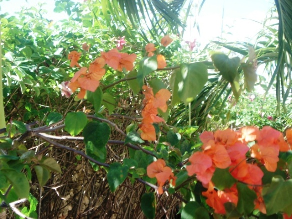 flowering tree Villa in Dominican Republic