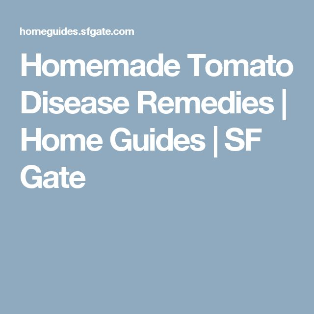 Homemade Tomato Disease Remedies   Home Guides   SF Gate