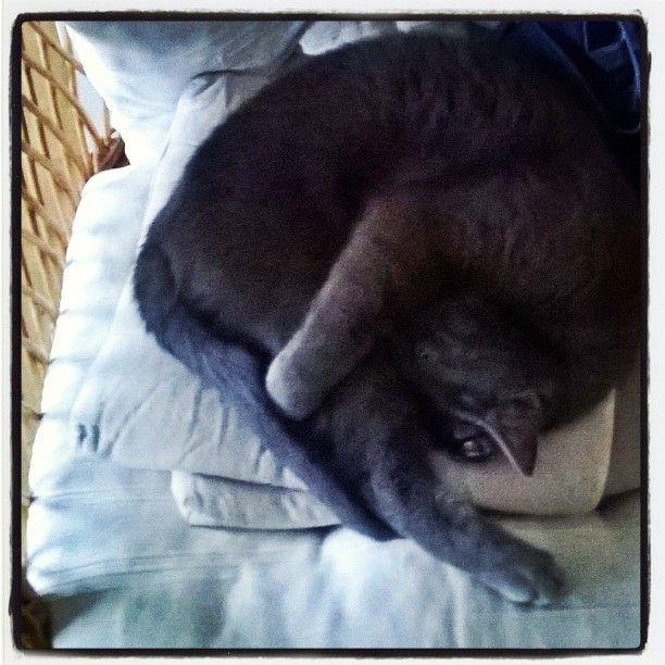 """""""#kissajoogaa, osa 2. #kissa  #cat #catyoga"""""""