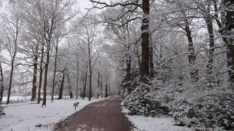 Walks and winter wanders Attingham Park