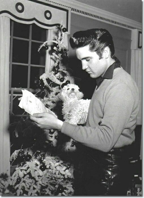 Elvis Presley with white toy poodle who belonged to Gladys Presley and was named 'Duke' after John Wayne 1957
