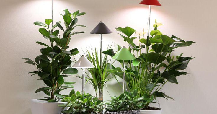 177 best indoor pflanzen pflege tipps images on pinterest - Bambus pflege zimmerpflanze ...