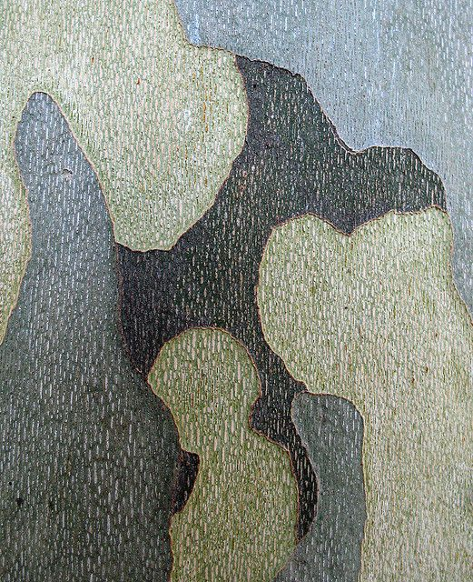 photographic abstraction. But this is a sicomore's bark, I think...