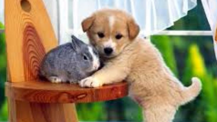Animale haioase ★ Incearca sa nu razi ★ Animale amuzante