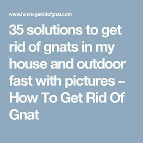 Best 25 Gnats Away Ideas On Pinterest Gnat Repellant
