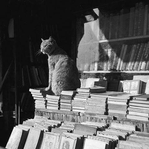 Cumva, în subconștientul colectiv, între pisici și cărți este o legătură indestructibilă...