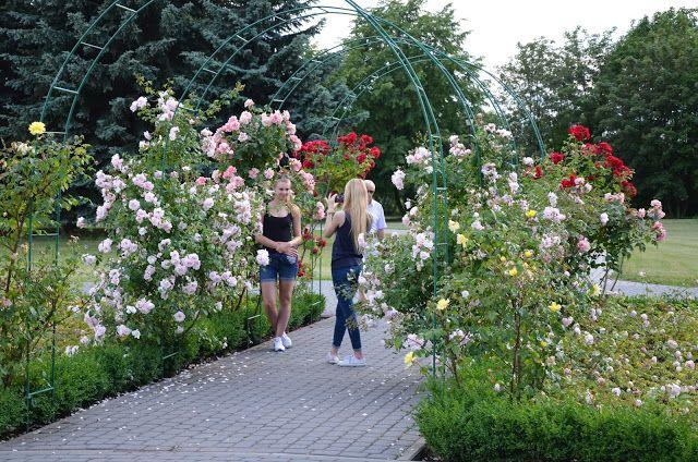 Kroniki Inowrocławskie: Czarują Róże, w kolejce czekają Hortensje, Lilie i...