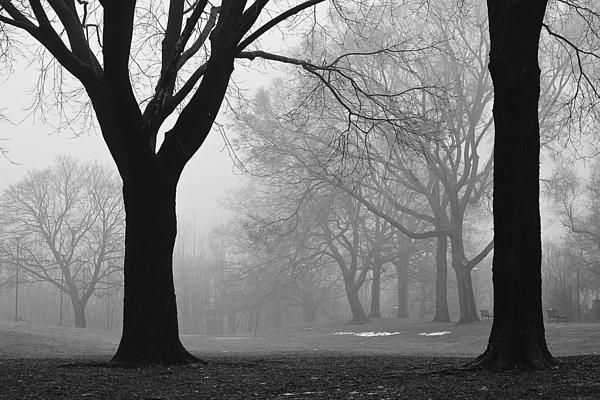 My Monarch Park study from the same spot, of the same image, during different seasons and conditions brought me here on a foggy winter morning, with just a few patches of snow remaining following a January thaw. #trees, #fog, #winter