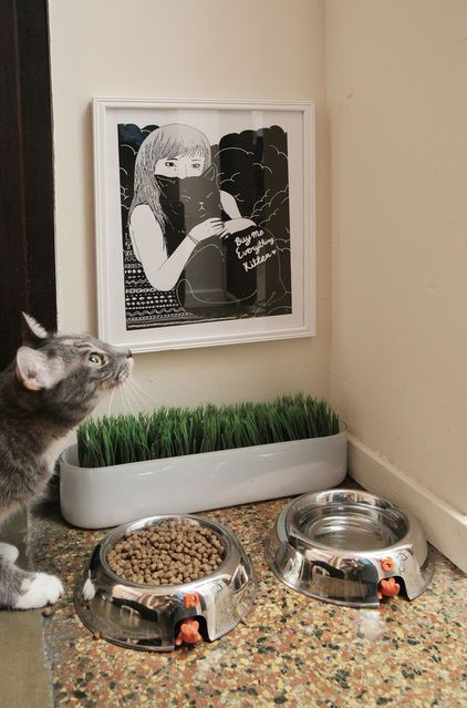 Dedicated cat dining area including cat grass & cat art on the wall