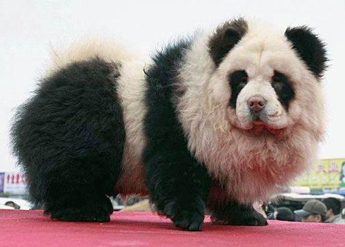 perro - panda