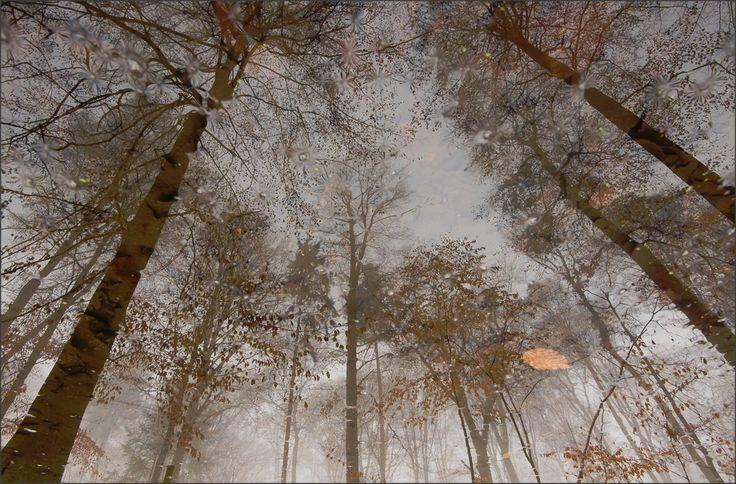 Foto: Bendiks Westerink / Heteren. Eiland in december Een vertind landschap verbergt morsige schandalen verzonken in bladgerande meertjes op de oever staan roerloos diepgewortelde bomen ze brengen ...