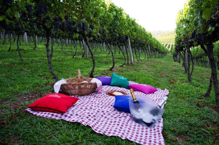 Piquenique, Vinícola Larentis - Bento Gonçalves, RS   larentis.com.br   #bentogolcalves #serragaucha #riograndedosul #brasil #brazil #vinicola #vinho #enoturismo #piquenique