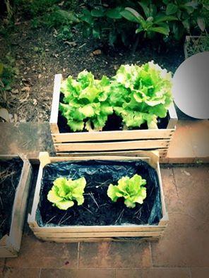 #G.vegetablegarden #ortointerrazza #piccoliortidomesticicrescono #ortocapovolto #lattugheincassette