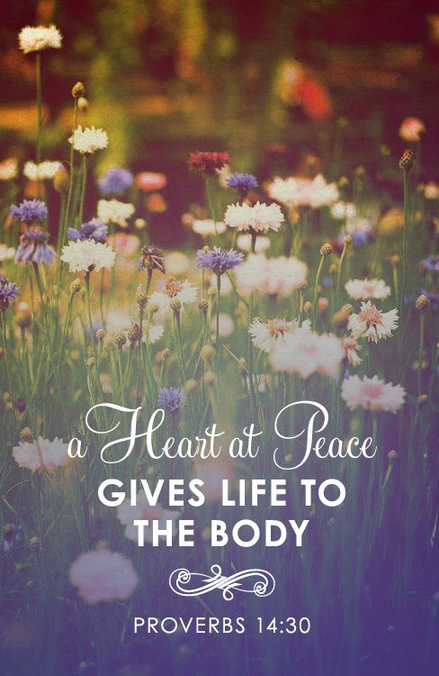 a heart at peace gives life to the body #Proverbs 14:30 #scripture: