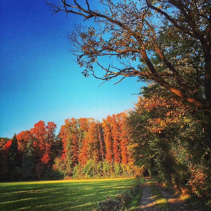 #foliage  #foliageseason #autumn2015 #autunno2015 #parcodelticino #sestocalende #sentieridautunno #outdoorwomen #provinciadivarese #igervarese #greenlife #landscape_lovers #walking #trekkinglovers
