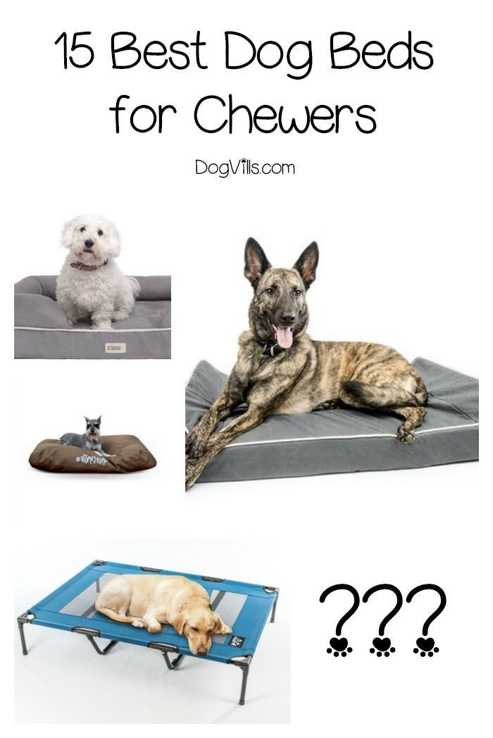 Finding The Best Dog Beds For Chewers Is A Bit More Difficult Than