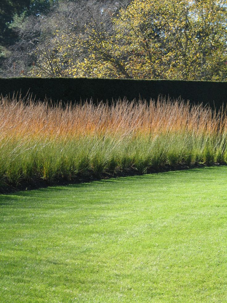91 best images about gramin es vivaces on pinterest for Ornamental grass design