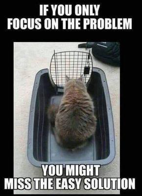 Deze kat is enorm aan het vastdenken. Want met alleen focussen op het probleem, zie je de oplossing soms compleet over het hoofd.Bedankt voor de tip Susan!