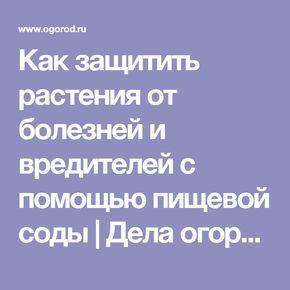Как защитить растения от болезней и вредителей с помощью пищевой соды   Дела огородные (Огород.ru)