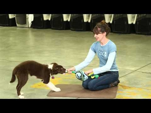 ▶ Mental Enrichment With Toys and Games | Teacher's Pet With Victoria Stilwell - YouTube