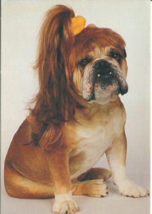 12 Dix Sept Postcard, Bulldog in Wig