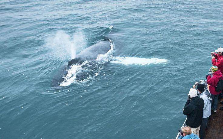 https://chasinglights.com/tour/whale-watching-safari-sailboat/