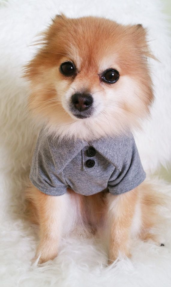 Check out this item in my Etsy shop https://www.etsy.com/ca/listing/238249830/dog-gray-tshirt-sweater-dog-pk-shirt-dog