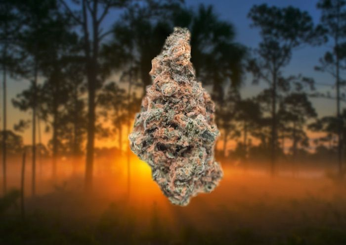 Marijuana decriminalization took a quantum leap forward on Tuesday when the Atlanta City Council's Public Safety Committee approved a bill to decriminalize the personal possession of marijuana (less than one ounce).