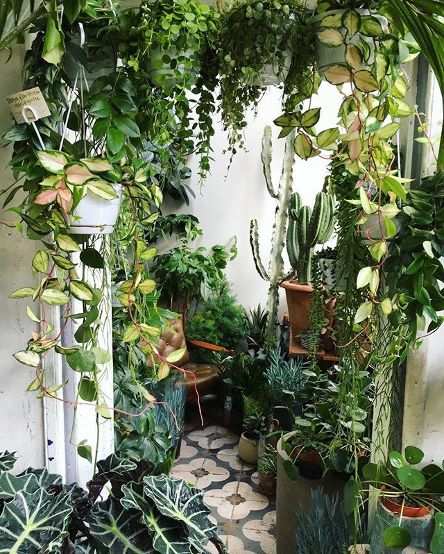 [What a great little nook! You could sit in that chair and read, or just relax and breathe in the oxygen the plants have breathed out, so to speak. I like the damp scent of the soil and the growing plants.] Now that is a jungalow! #houseplantsdecor