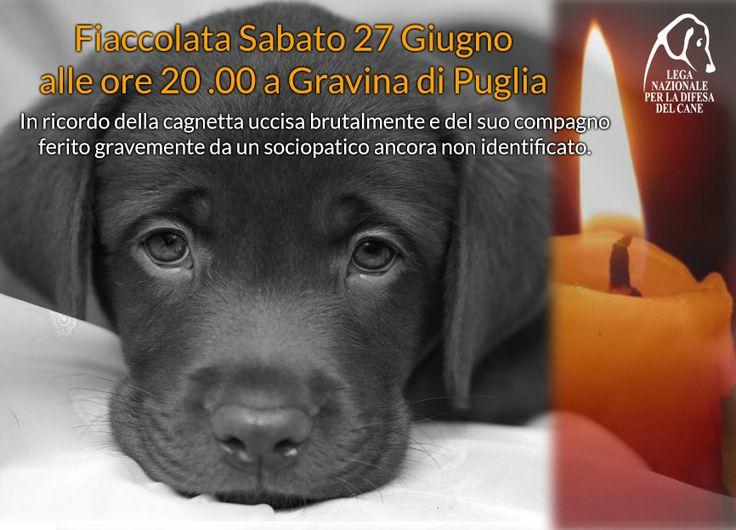 27/6 #fiaccolata per ricordare Anna & Frank #Gravina di #Puglia - #animalicidio